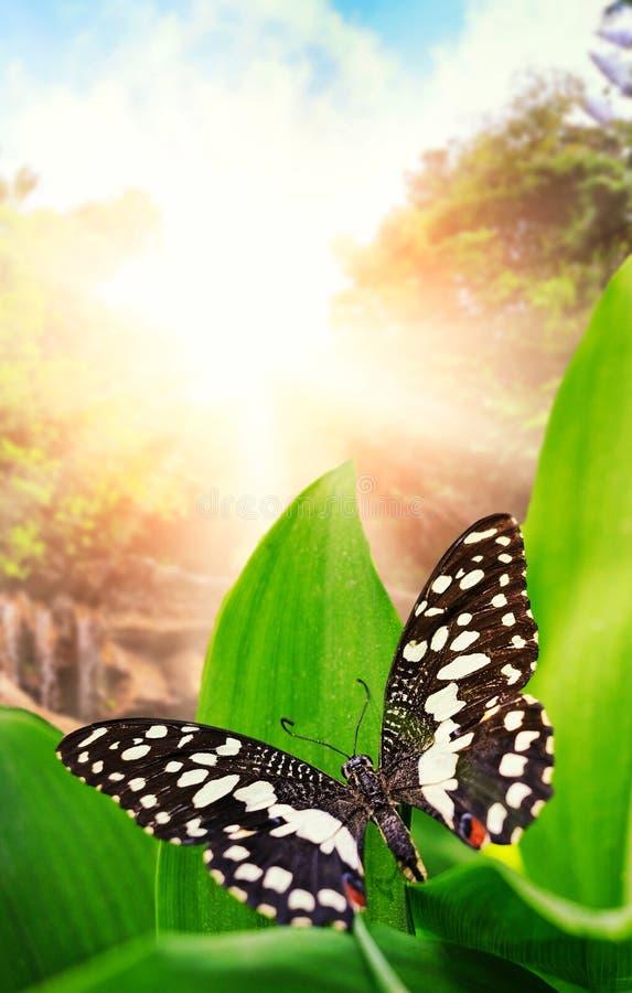 Nad siklawą dziką motyli las