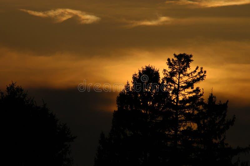 nad sunset drzewami obrazy stock