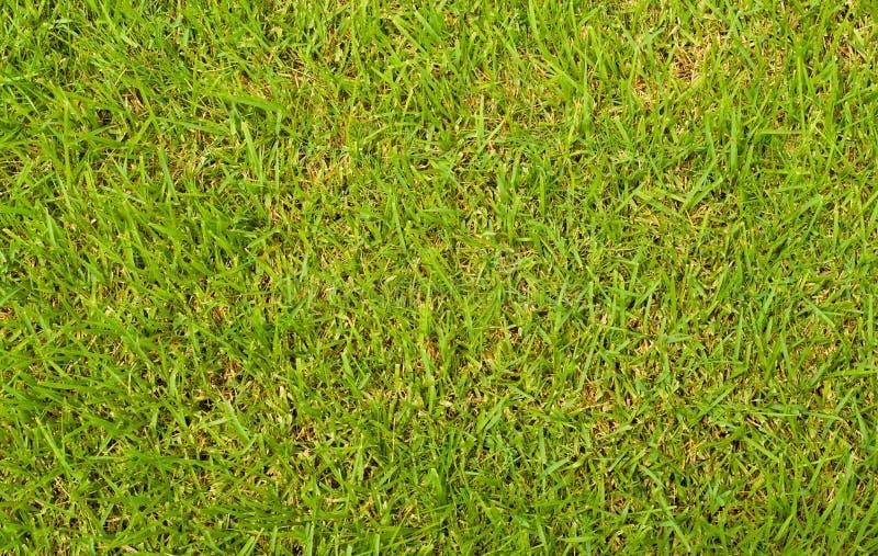 nad trawy zieleni widok fotografia stock