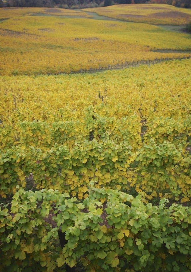 Nad Złotymi winogradami obrazy stock