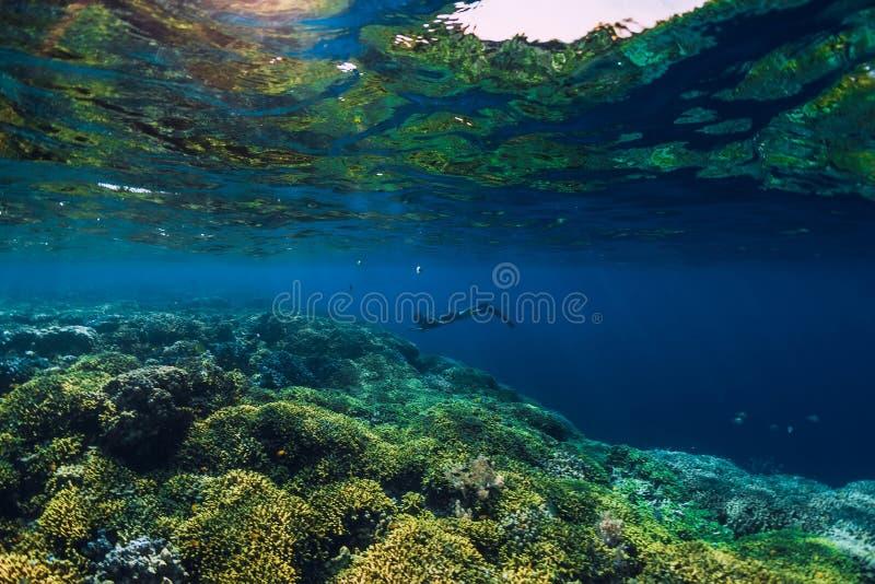 Nadada livre do mergulhador no oceano, foto subaquática com corais foto de stock royalty free