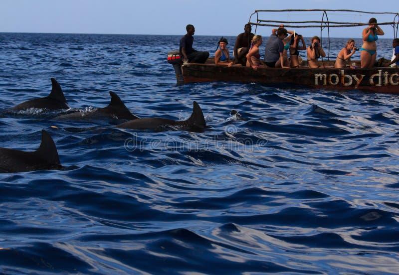 Nadar com golfinhos imagens de stock royalty free