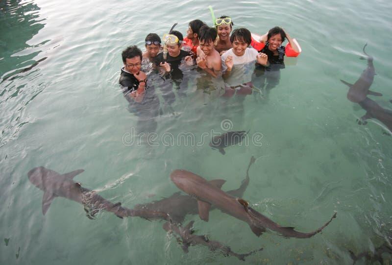 Nadar com tubarões fotos de stock royalty free