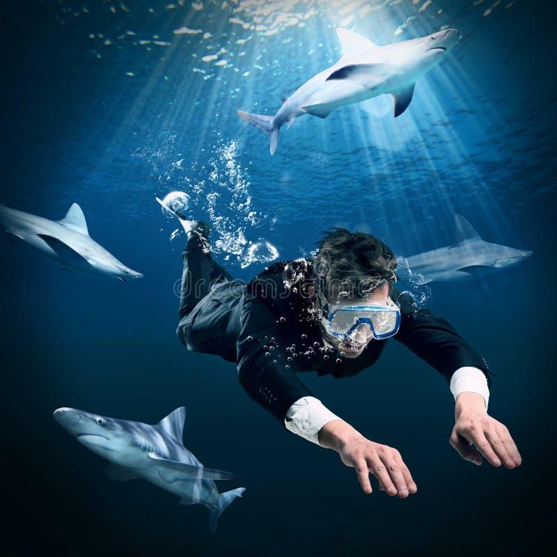 Nadar entre tubarões fotografia de stock royalty free