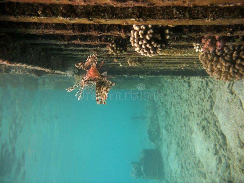 Nadar perto da parede imagem de stock royalty free
