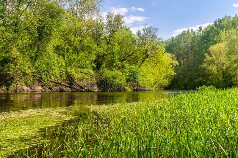 Nadb?otna natura Luizjana USA Naturalni parki fotografia stock