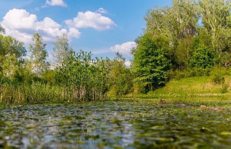 Nadb?otna natura Luizjana USA Naturalni parki zdjęcia royalty free