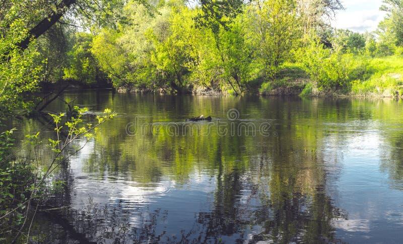 Nadb?otna natura Luizjana USA Naturalni parki obraz royalty free
