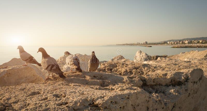Nadbrzeże San Benedetto Del Tronto, Włochy - zdjęcie royalty free