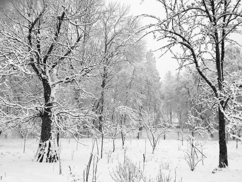 nadchodząca zima fotografia royalty free