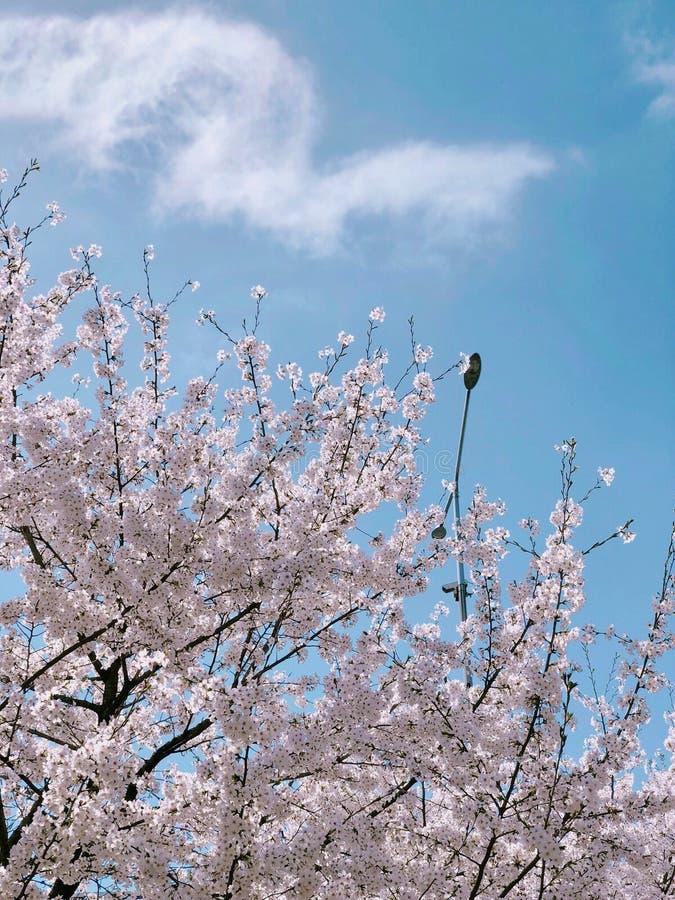 nadchodzącej wiosny fotografia royalty free
