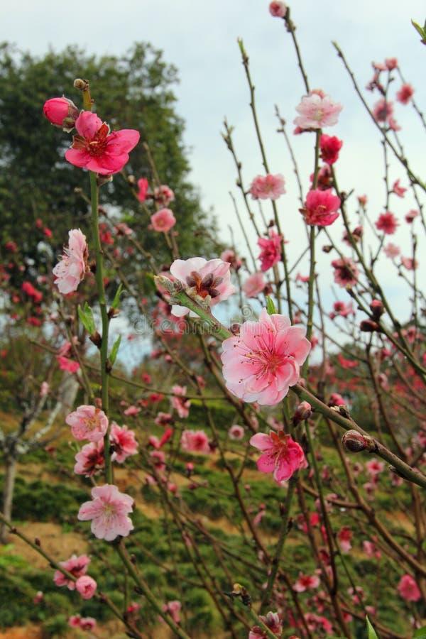 Download Nadchodzącej wiosny zdjęcie stock. Obraz złożonej z okwitnięcia - 53780480