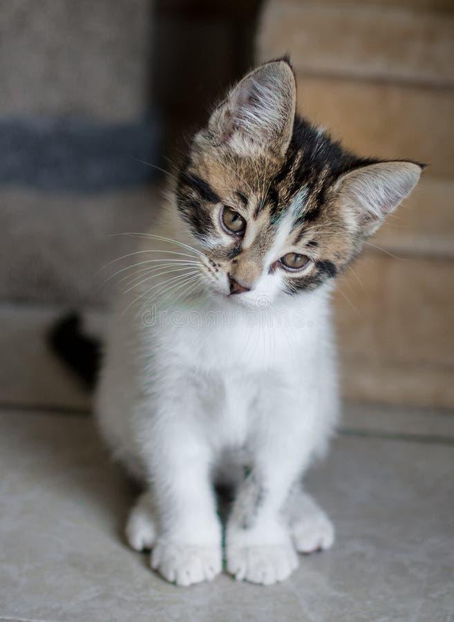 Nadenkend Katje stock foto