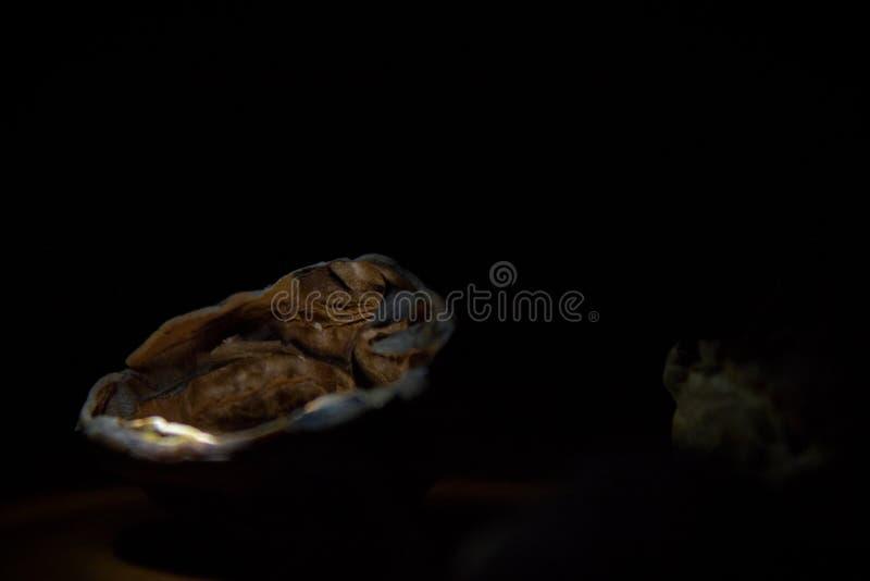 Nadenkende dichte omhooggaand van lege okkernootshell met binnen verlicht in de duisternis stock fotografie