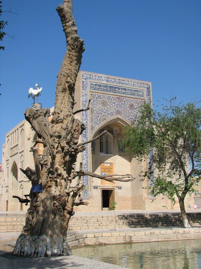 Nadir Divan-Begi khanaka i Bukhara royaltyfria bilder