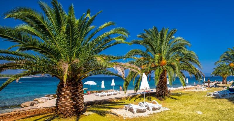 Nadmorski deptak na Brac wyspie z drzewkami palmowymi i turkusu oceanu jasną wodą, Supetar, Brac, Chorwacja obrazy royalty free