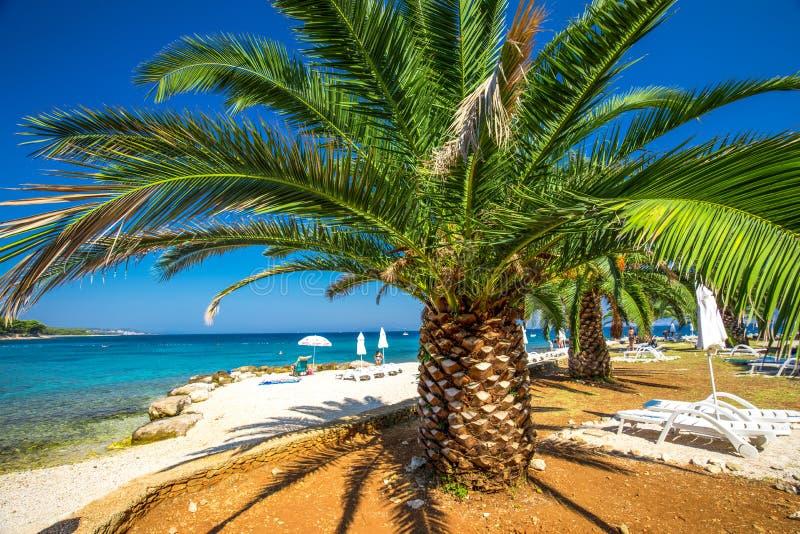 Nadmorski deptak na Brac wyspie z drzewkami palmowymi i turkusu oceanu jasną wodą, Supetar, Brac, Chorwacja obraz royalty free