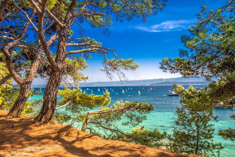 Nadmorski deptak na Brac wyspie z sosnami i turkusu oceanu jasną wodą, Bol, Brac, Chorwacja zdjęcia royalty free