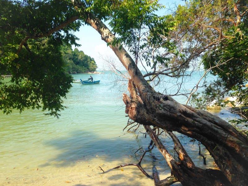 Nadmorski, plaża, rybak w łodzi, drzewo nad woda obrazy royalty free