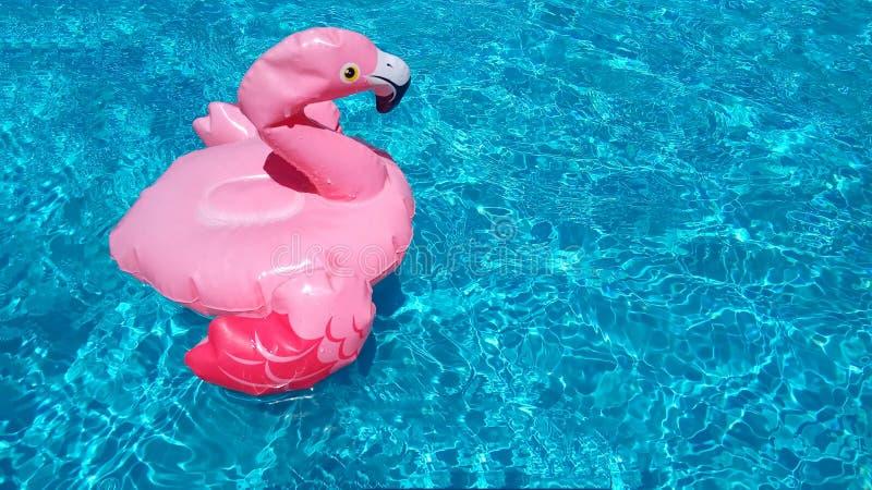 Nadmuchiwani dziecko zabawki menchii flaminga pływania w jasnej błękitnej turkusowej czochra basenu wodzie Tam jest miejsce dla t obrazy royalty free