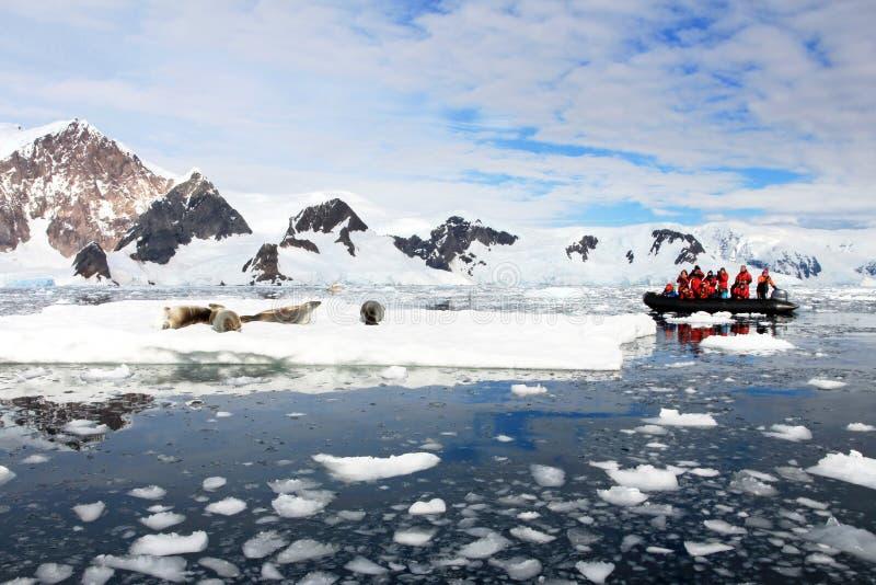 Nadmuchiwany łódkowaty pełny turyści, oglądający dla wielorybów i fok, Antarktyczny półwysep zdjęcie stock