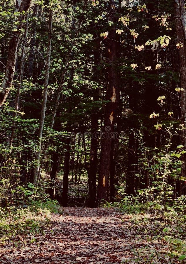 Nadnaturalna lasowa magiczna psychics pomyślności narratorów tajemnicy kryjówka obraz royalty free