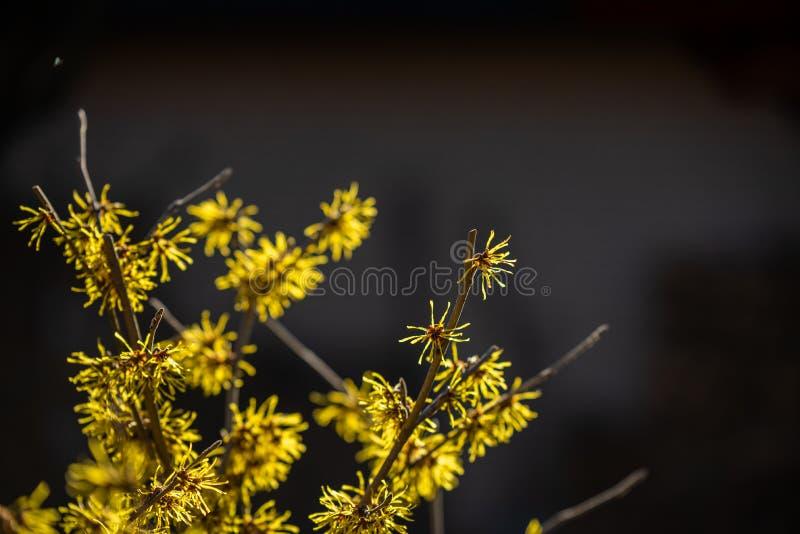 Nadruk op aardbloemen, bladeren en stammen stock foto