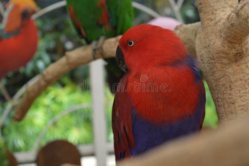 Nadruk op de rode vogel royalty-vrije stock afbeeldingen