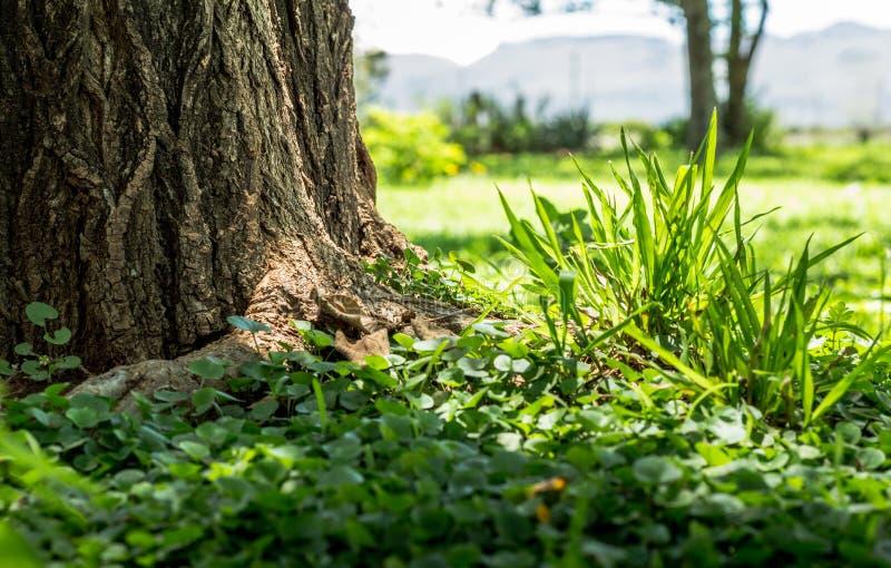 Nadruk op groene grasmassa en onkruidclose-up naast boom royalty-vrije stock afbeeldingen