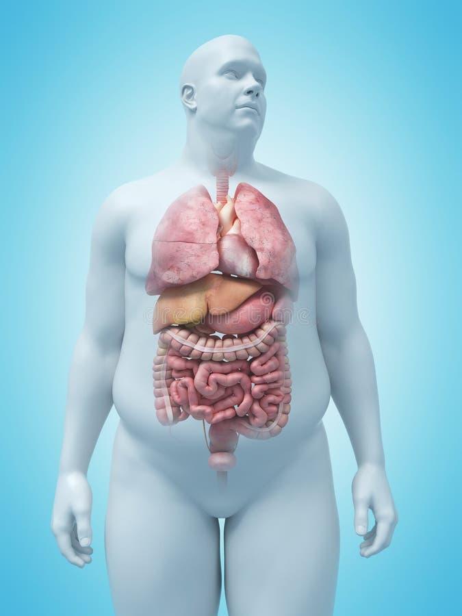 Nadwaga obsługuje organy ilustracja wektor
