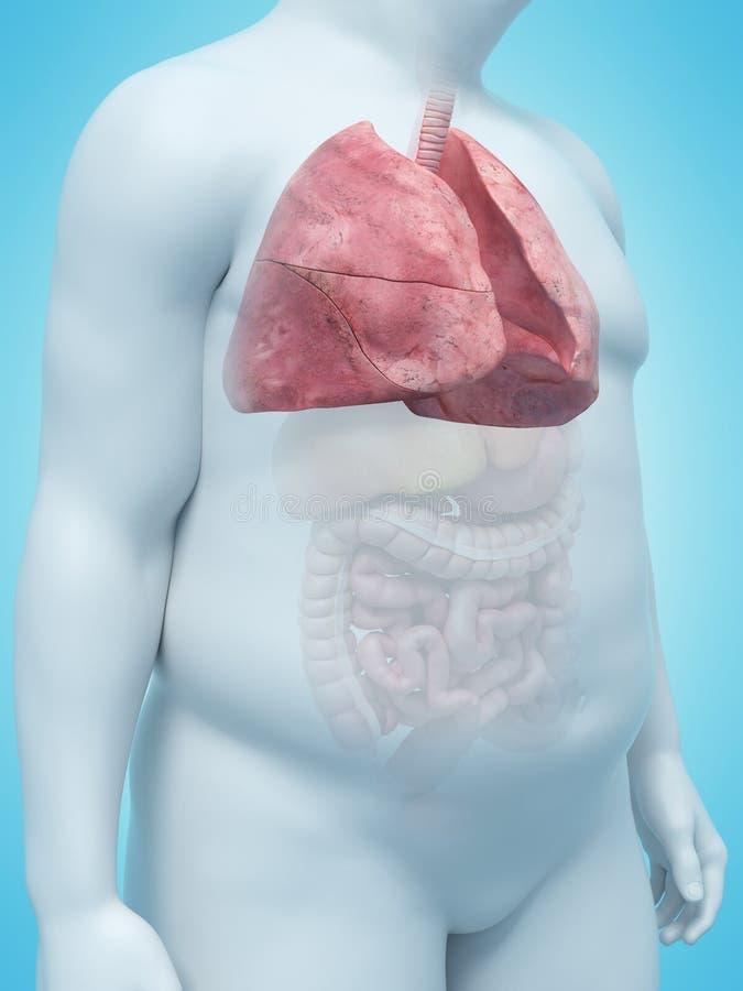 Nadwaga obsługuje płuco ilustracji