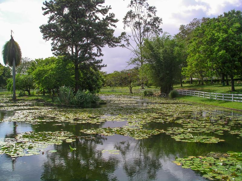 Nadzieja ogródy, Kingston, Jamajka fotografia royalty free
