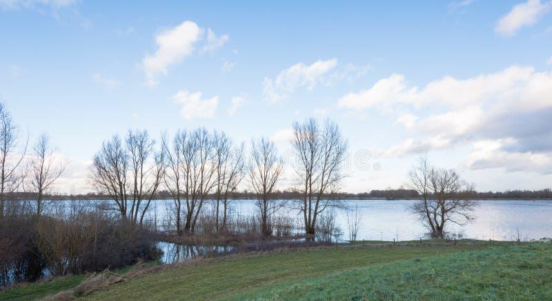Nadzy drzewa przy brzeg rzeki obrazy stock