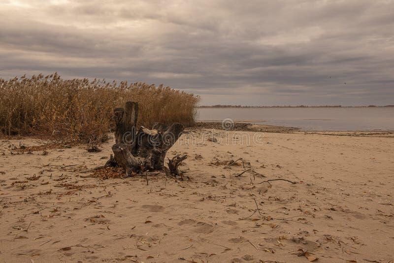 Nadzy drzewa rzeką w jesieni zdjęcia stock