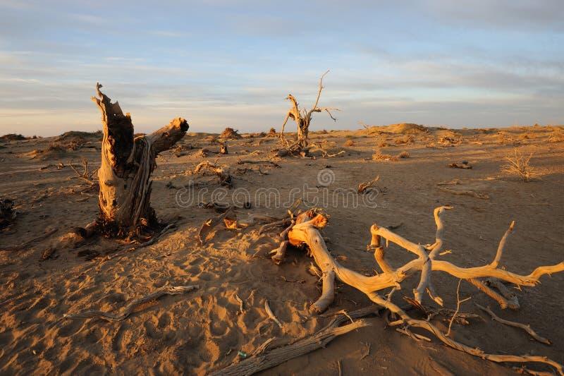 Nadzy drzewa w jesień świcie obraz royalty free