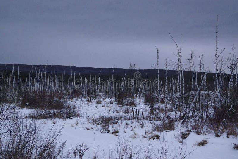 Nadzy drzewa w otwartym obrazy stock