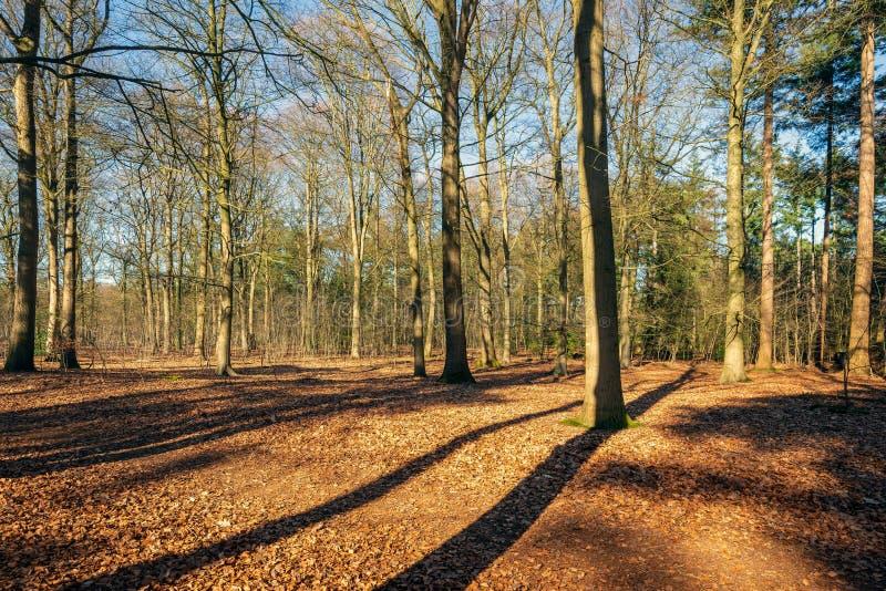 Nadzy drzewa w pogodnym lesie fotografia stock