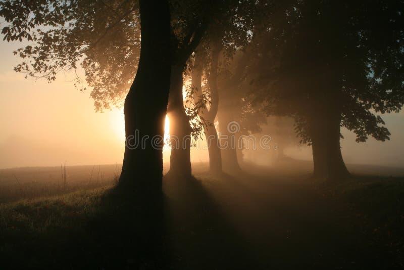 Download Naebbegaard fotografia stock. Immagine di autunno, alberi - 30831984
