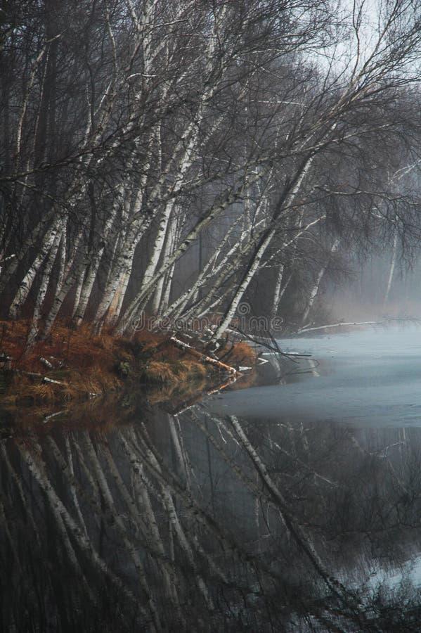 naga birch znaleźć odzwierciedlenie nadal drzewo wody zdjęcia stock