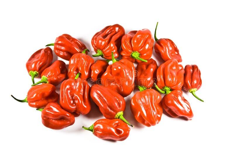 Download Naga Chillies stock photo. Image of studio, chillies - 16169936