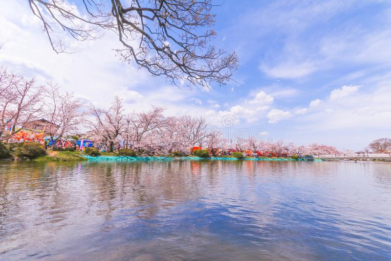 Nagano,Japan - ‎April 16, 2017:Beautiful cherry blossom , sakura of Garyu Park in spring time, Nagano,Japan stock photography