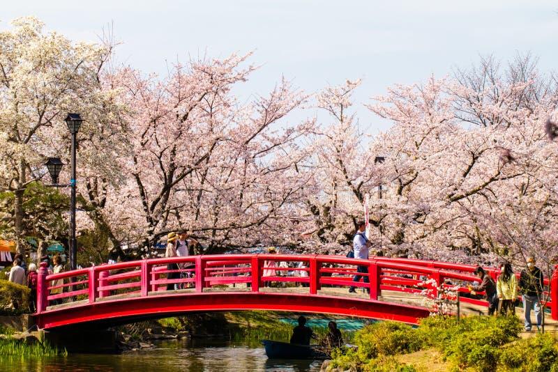 NAGANO, JAPAN - 19. April 2019: Schöne Kirschblüte, Kirschblüte der Zeit Garyu-Parks im Frühjahr, Präfektur Nagano, Japan lizenzfreie stockbilder