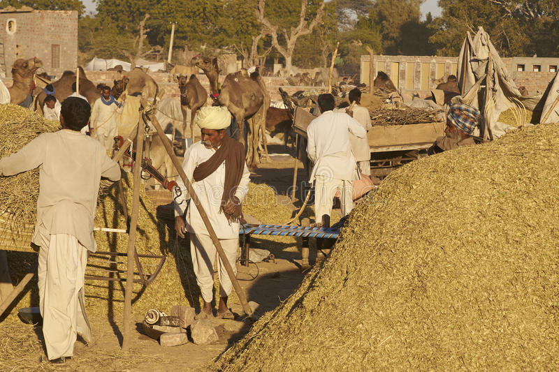 Nagaur Livestock Fair, India. Piles of ground up plant material for sale as animal fodder at the annual livestock fair in Nagaur, India royalty free stock images
