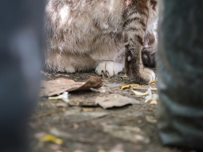 Nagel kommen aus Tabby Cat Leg heraus stockfotos