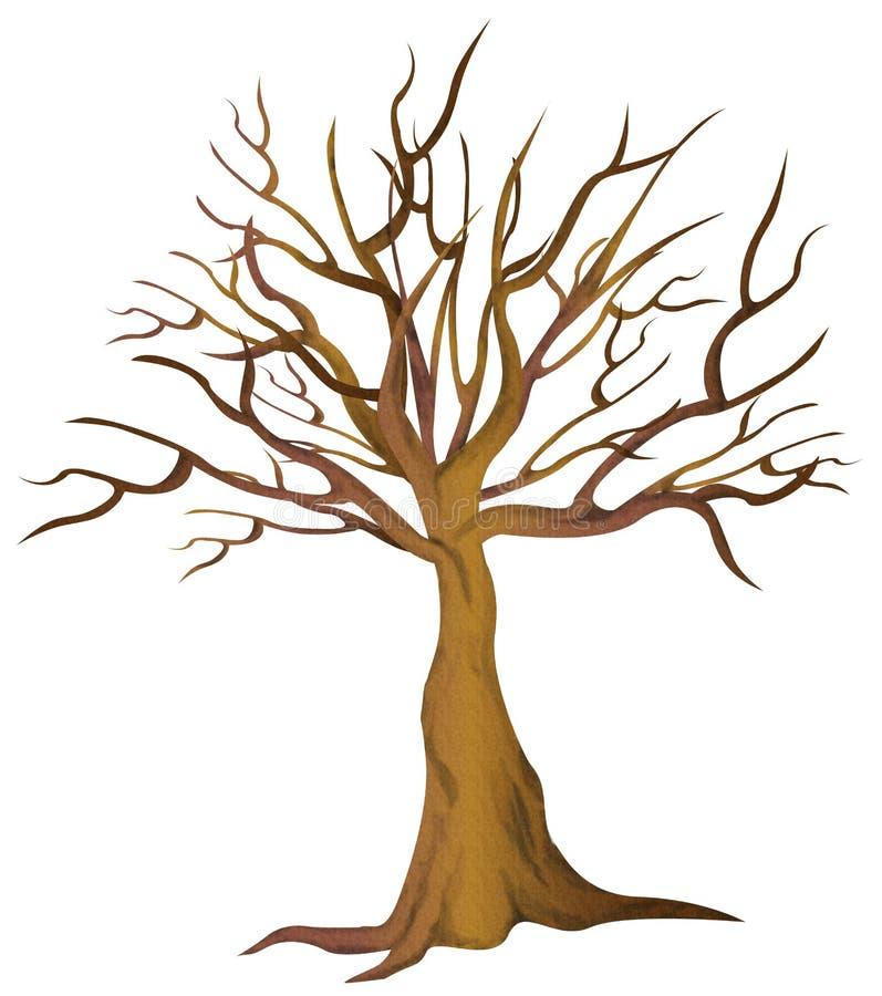 Nagi drzewo żadny liście royalty ilustracja
