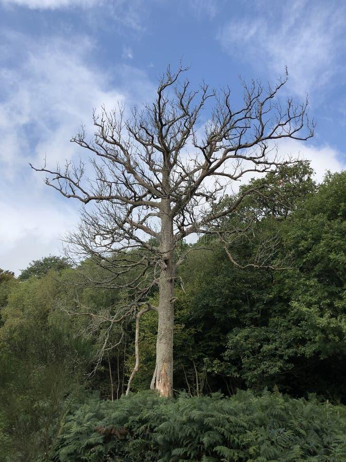 nagi drzewo obraz royalty free