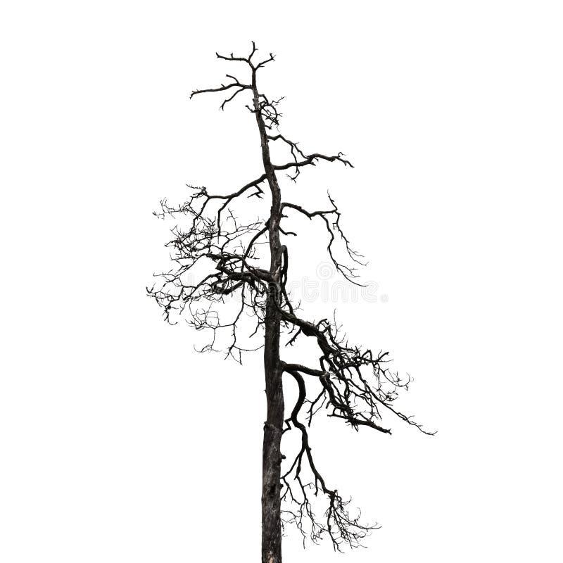 Nagi drzewo odizolowywający na białym tle fotografia royalty free
