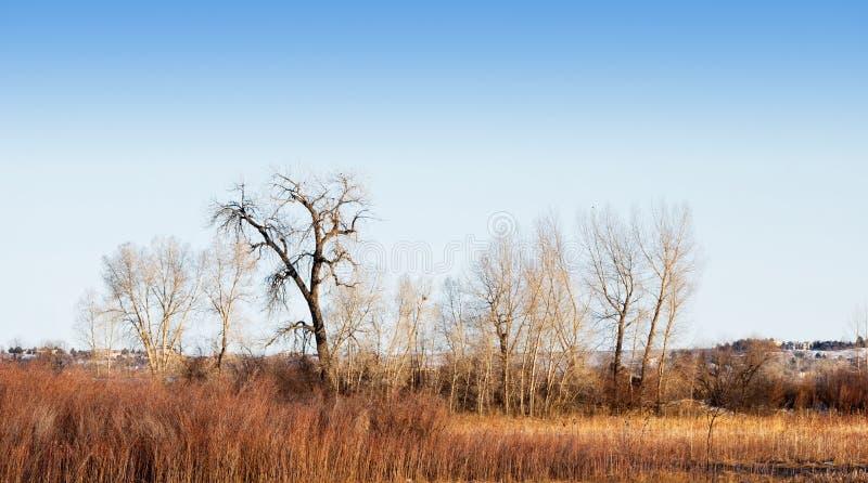 nagi drzewo pisać na maszynie rozmaitości zima obrazy royalty free