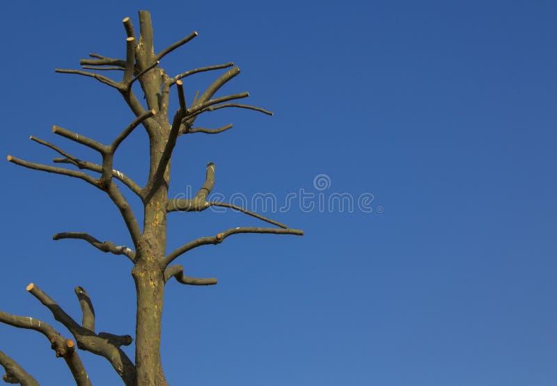 Nagi drzewo przeciw niebieskiemu niebu kosmos kopii zdjęcie royalty free