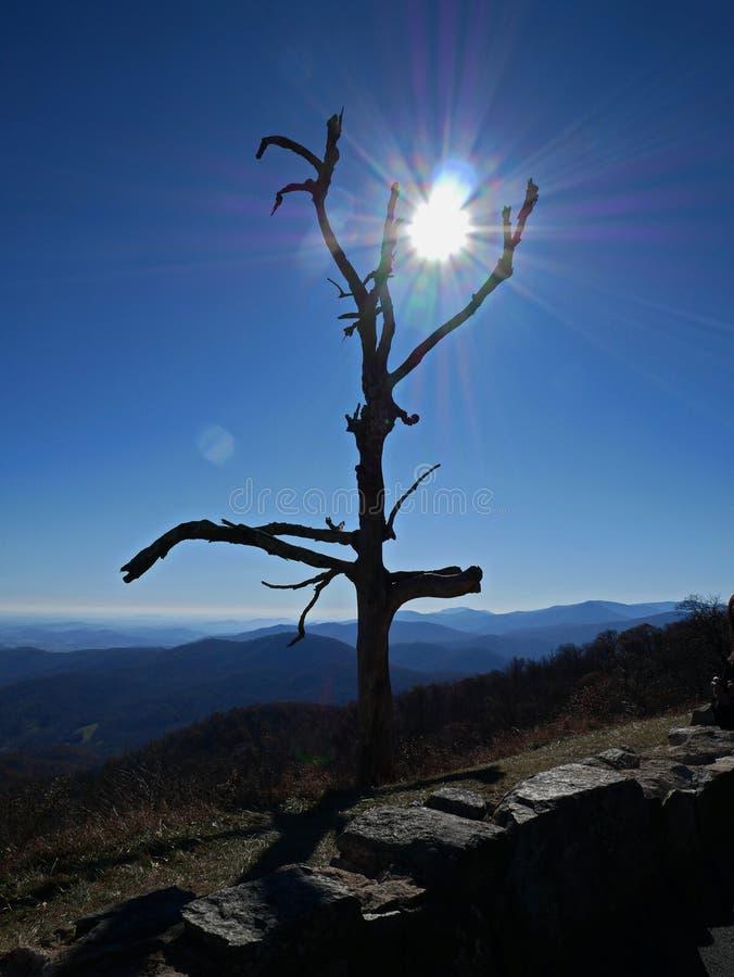 Nagi drzewo siedzi wysoko na górach obrazy stock